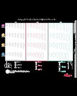 ノーベルパラレル CC ラジオグラフィック テンプレート